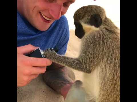 Monkey tries to catch smoke from vaping lad and attempts to vape itself